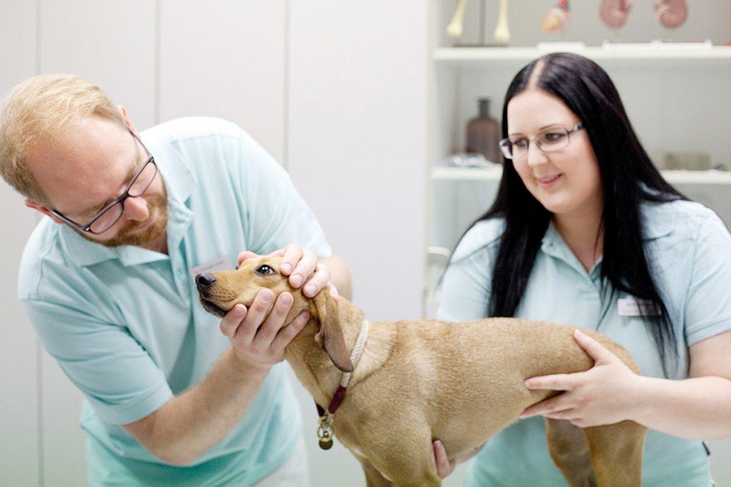 Tierarzt Dr. Christioph Szober